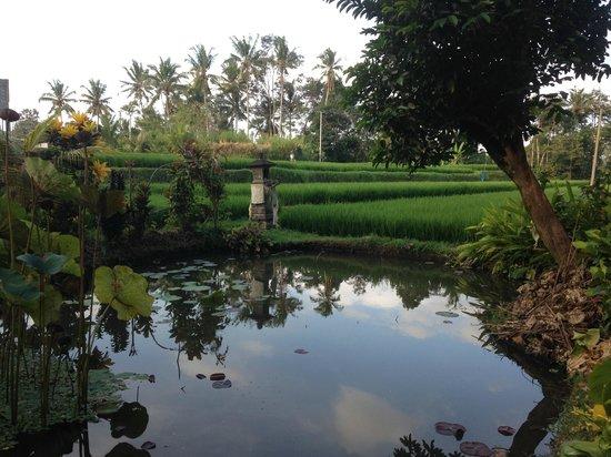 Sri Sunari Guest House : t front gate
