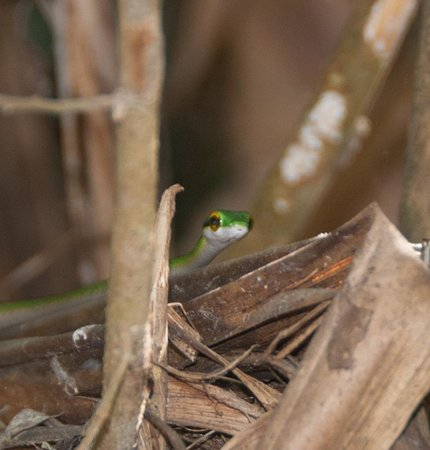 Playa Manuel Antonio: Little critters everywhere!