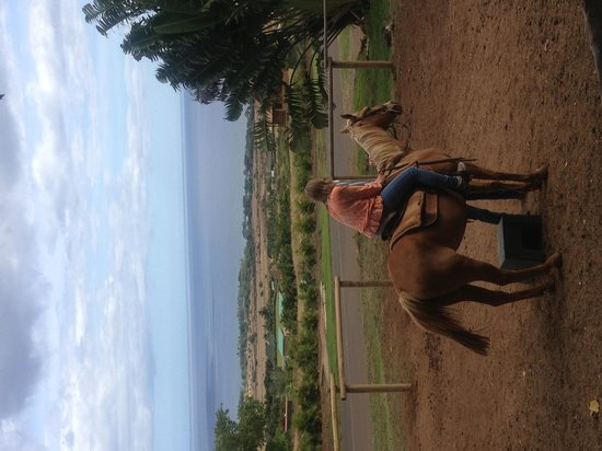 Lahaina Stables: The view from the stables
