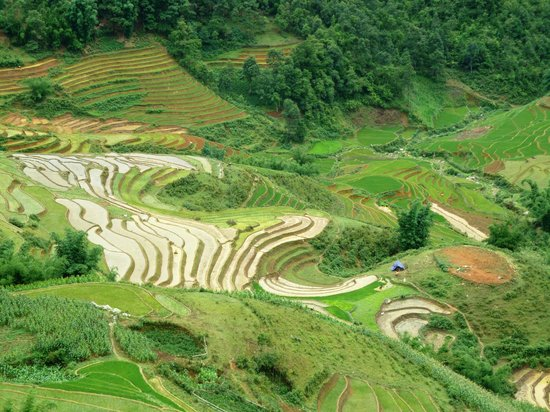 Muong Hoa Valley: Sapa in June 2014
