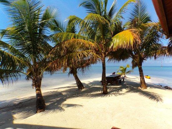 Hatchet Caye Resort: The Beach