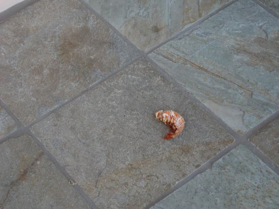 Taino Beach Resort & Clubs: Trash with Lobster Tail