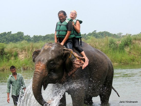 Chitwan Safari Camp & Lodge: Elephant bathing