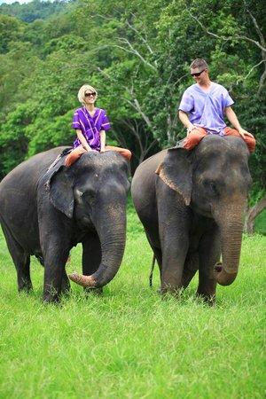 Patara Elephant Farm - Private Tours : Amazing Day at Patara!