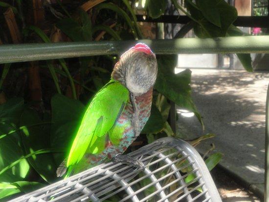 San Diego Zoo: Общительный попугай :)