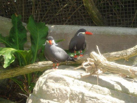 San Diego Zoo: Красавцы! :)