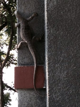 Ambong Ambong: Spotted a huge lizard from window