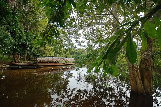 Pacaya Samiria Amazon Lodge : Yarina