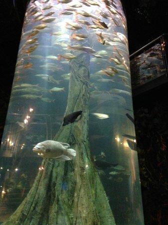 Aquaria KLCC: Everyone stop here to take photo and I was stuck here too