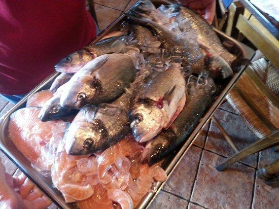 Caffe Bocconcino: Fresh catch......