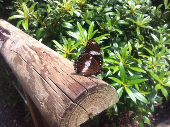 Coffs Harbour Butterfly House : butterlfies