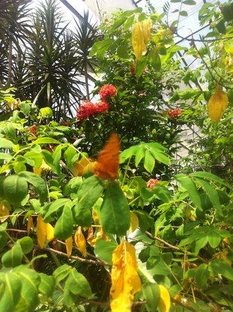 Coffs Harbour Butterfly House : butterflies