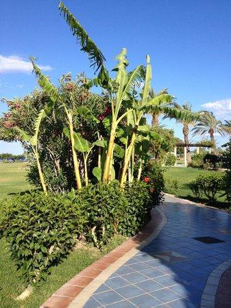 Atrium Palace Thalasso Spa Resort & Villas: Les promenades vers les différents logements