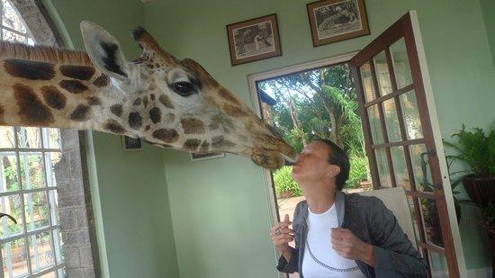 Giraffe Manor : Спасибо за угощение!
