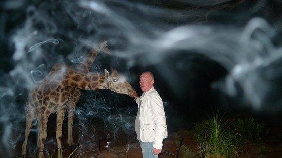 Giraffe Manor : Атмосфера любви!