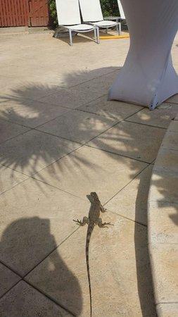 Brickell Bay Beach Club & Spa : more iguanas