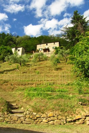 Casa Verde Holiday Accommodation & B&B: Vegetable & Fruit garden