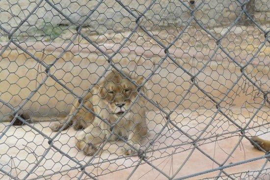 Zoo Fauverie du Faron : ................