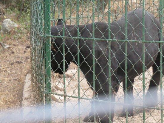 Zoo Fauverie du Faron : ..................