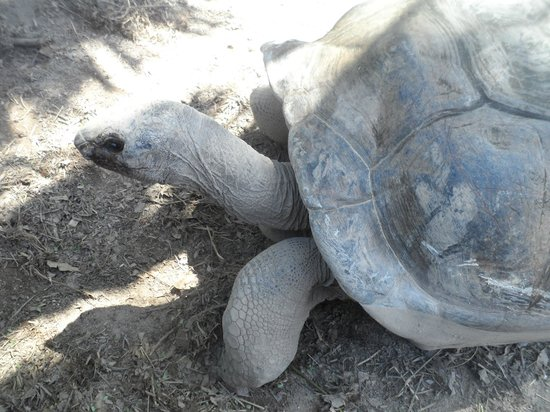 Le Domaine de La Reserve : tartarughe giganti