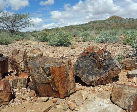 Petrified Forest : Petrified tree trunks