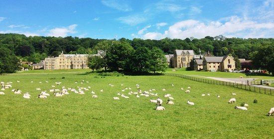 Ampleforth Abbey: Sheep grazing at Ampleforth