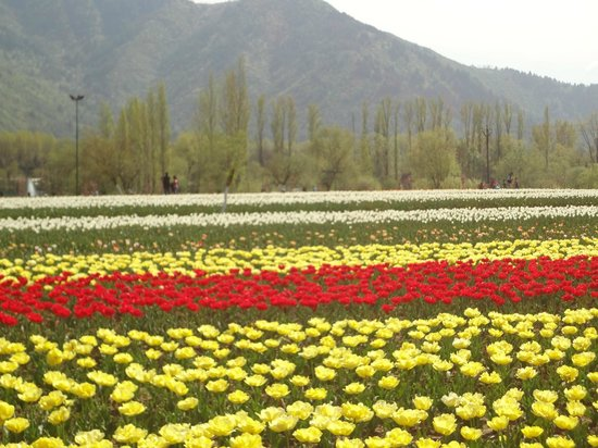 Kashmir Valley Travels Day Tours