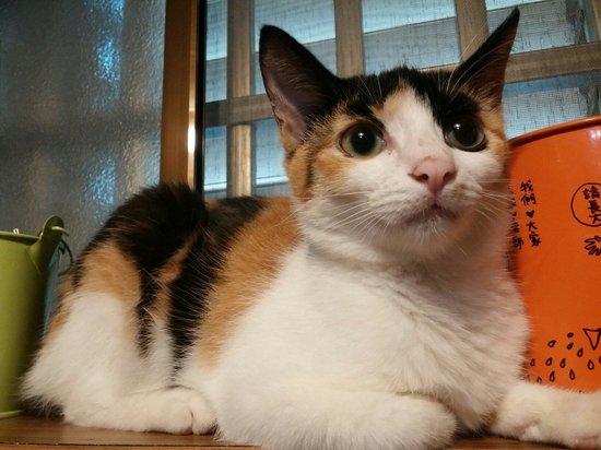 Susu Guesthouse : Sweet cat