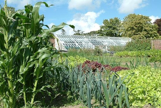Rhosygilwen: Another view of the walled garden