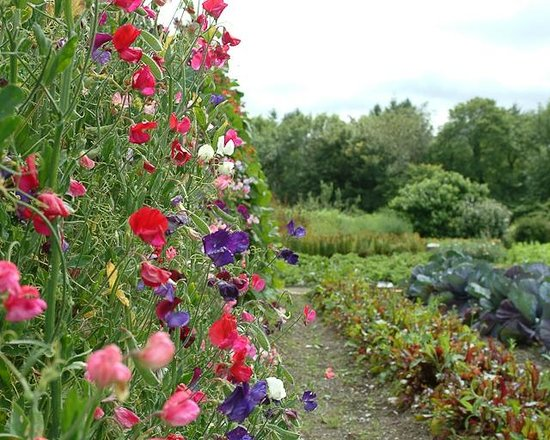 Rhosygilwen: Walled Garden in Summer - almost an acre