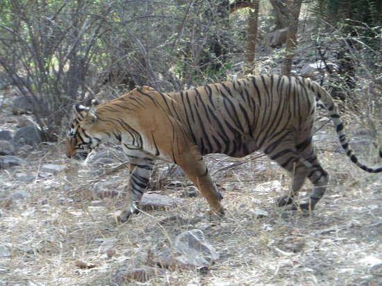 Ranthambore National Park: The show is over