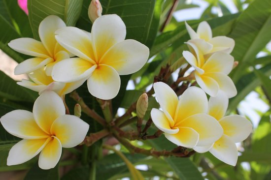 Hilton Sharks Bay Resort: просто красивые цветочки)