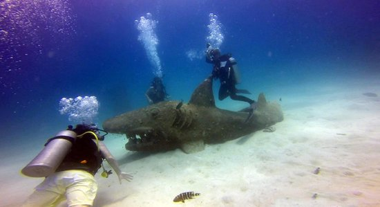 Goodtime Adventures, Koh Tao : Shark riding