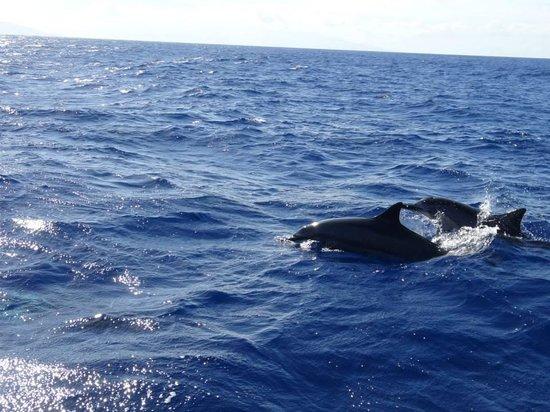 Maui Adventure Cruises: Dolphins