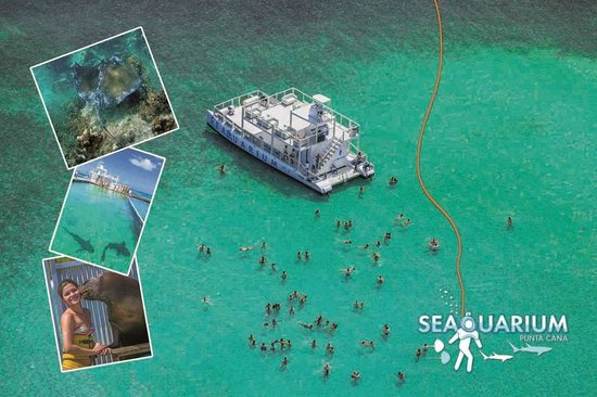 Seaquarium Punta Cana : Boat Party, Sharks & Sting Rays and more...
