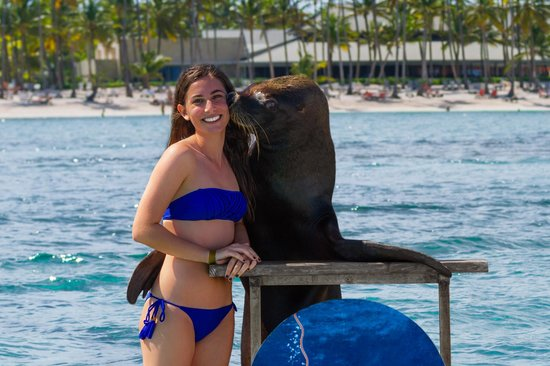Seaquarium Punta Cana : Sea Lion Encounter