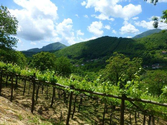 Swirl The Glass: The beautiful vineyard