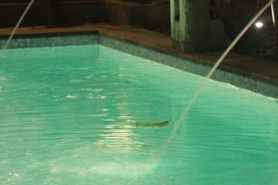 Rumah Batu Villa & Spa: swimming pool