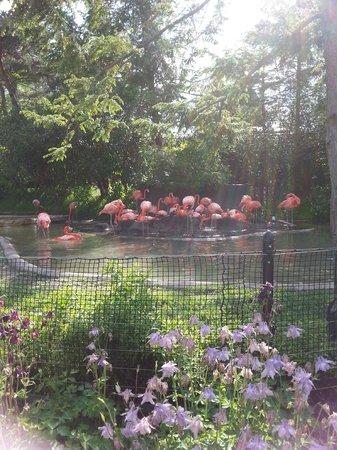 Columbus Zoo: Pink Flamingo
