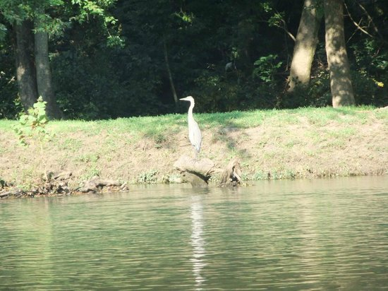 Missouri: Heron on the Eleven Point River