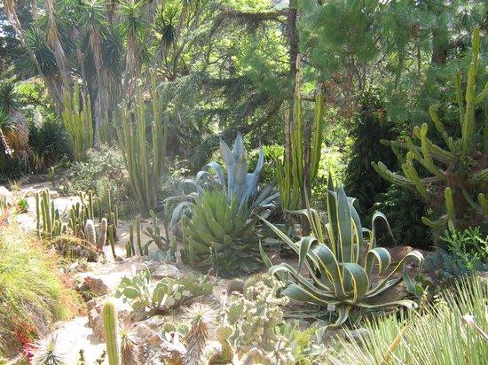 Jardin Botanico Marimurtra : Ботанический сад в Бланес