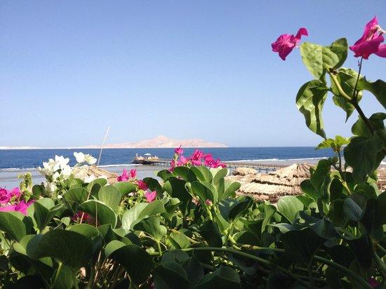 Cleopatra Luxury Resort Sharm El Sheikh: vista dal grill beach
