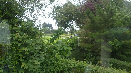 Par Sands Coastal Holiday Park: View of greenery from window
