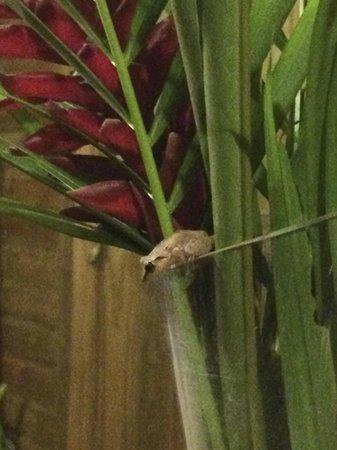 Au jardin des colibris : Frog