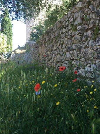 Nena al Borgo Castello: Pico