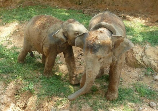 Elephant Freedom Project: Washtu hugs Sujee with his trunk