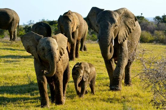 Kariega Game Reserve: Our first sighting of the elephants