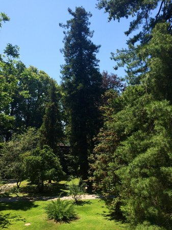Orto Botanico di Lucca : Taken from the elevated steps
