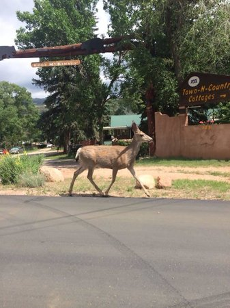 Town-N-Country Cottages : Entrance with deer