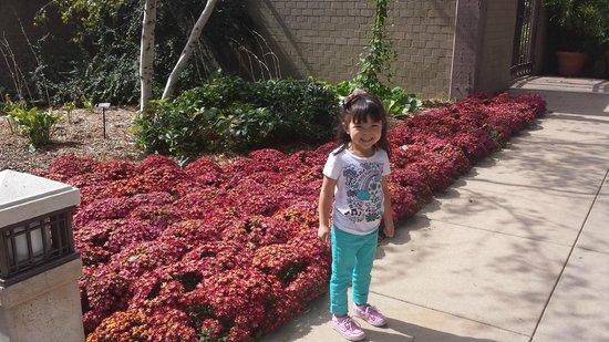 Botanica: The Wichita Gardens: beautiful scenery